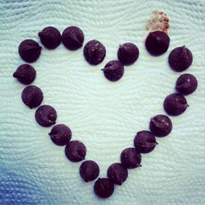 foto por mi. Pedazos de perfección, eso son las chispas de chocolate.